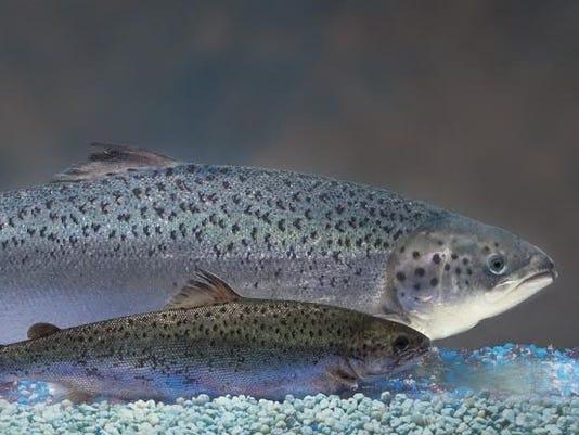 636384932449180462-salmonn.jpg