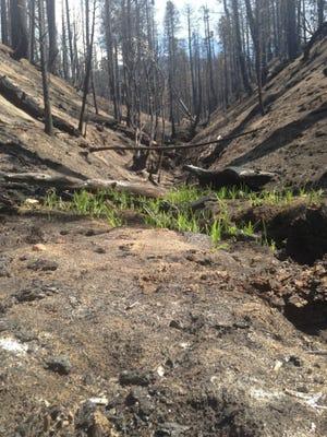 The burnt wilderness area near Lake Jenks.