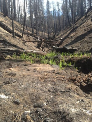 The Lake Jenks wilderness area was scorched during the Lake Fire.
