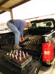 Bob Gibbs loads some transplants that were going up for sale during a past Master Gardener sale. Classes for the next group of Master Gardener begins Sept. 19.