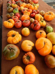 Greenhouse-grown tomatoes from Country Fresh Herbs are available year-round at the Westlake Village farmers market.