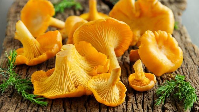 It's the season for fresh wild-foraged golden chanterelles in Oregon