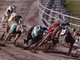 Corpus Christi Greyhound Race Track Would Draw Crowds For Dog Races