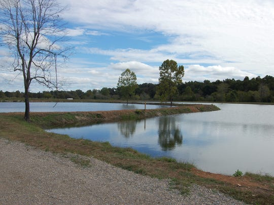 Visitors may fish in the ponds at McCabe Park, but there is a limit of three fish person per day.