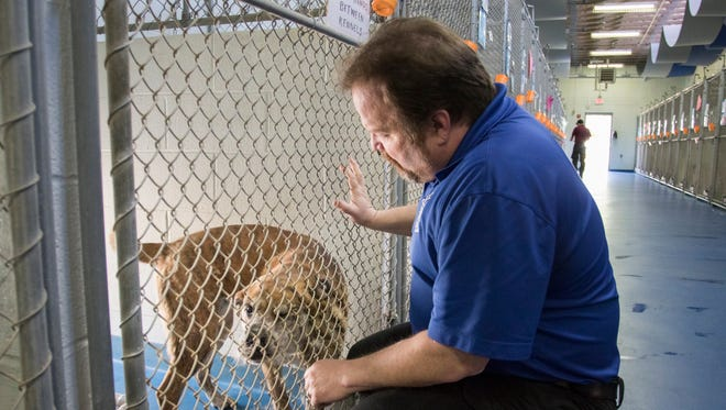 Escambia County Animal Control Director John Robinson checks on dogs at the Pensacola shelter on Wednesday.