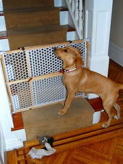puppy proofing