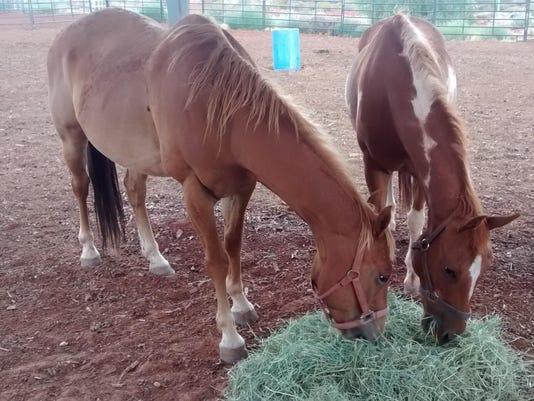 HORSES 7-4-15