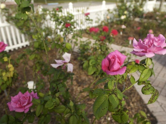 Cape Coral Historical Museum offers free garden tour Oct. 14.