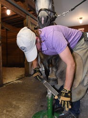 Elke Albrecht, a farrier, dresses the front of Cali's