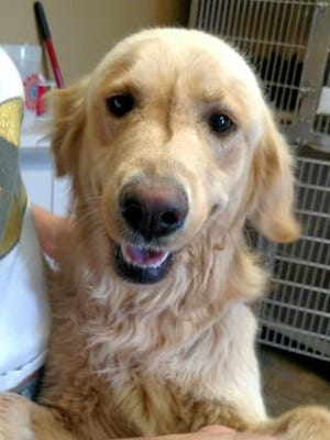 Pet of the day: Homer