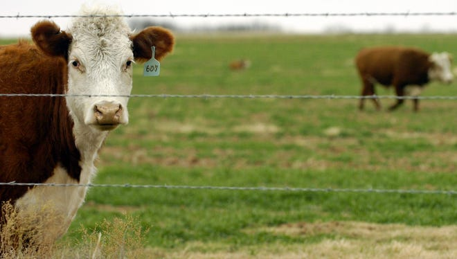 Wheat growers and beef cattle producers are invited to the Cattle Trails Cow-Calf Conference Dec. 1 in Lawton. The conference is jointly organized by the Extension specialist serving North Texas and southern Oklahoma.