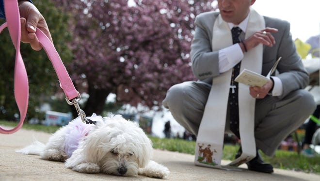 Zoey, owned by Marisa Sanfilippo of Red Bank, is blessed by Matty Giuliano, Chaplain of Monmouth County SPCA. The Monmouth SPCA annual dog walk and pet fair takes place at Brookdale Community College.Lincroft, NJ Saturday, April 30, 2016@DhoodHood