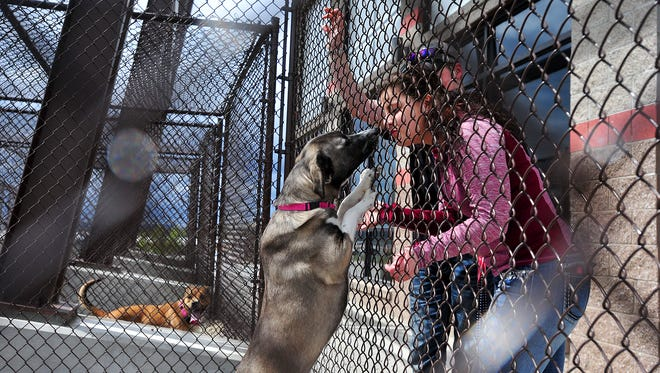 Sage Sundstrom and Chance Edwards visit Airy, a one year old Akita mix at the Maclean Animal Adoption Center.