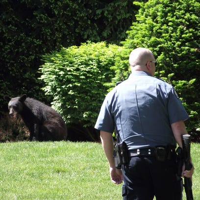 Police were on scene of a bear that traveled from Midland