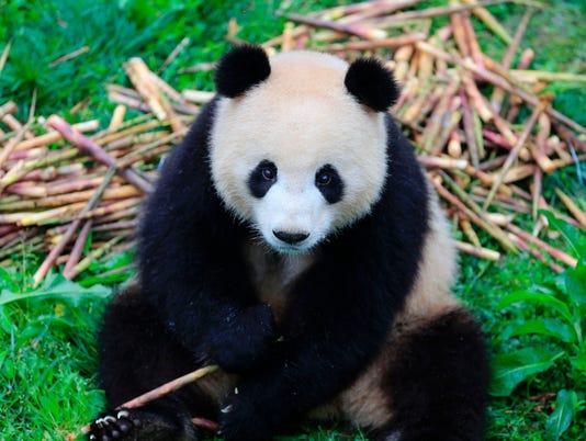CHINA-GERMANY-PANDA