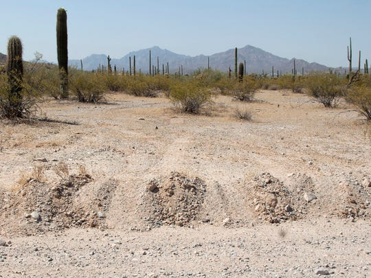 Vehicle tracks in June turn off the road into Organ Pipe Cactus National Monument near Lukeville.