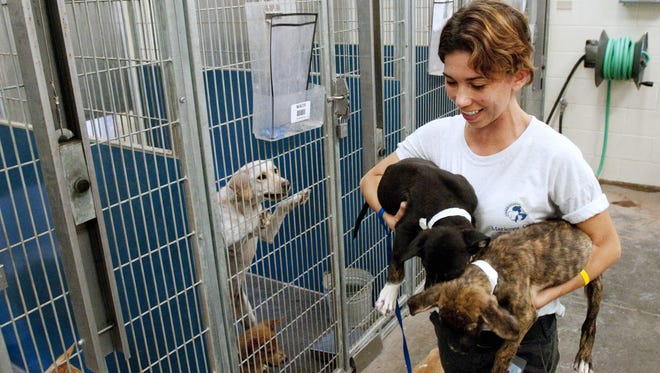 The Maricopa County animal shelter is facing a $2 million budget shortfall. Eleven people were laid off on June 24, 2016, but officials said animal care would not be affected by the cutbacks.