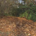 Don't rake your leaves, scientists say