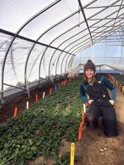 Graduate student Kaitlyn Orde prepares to harvest spinach