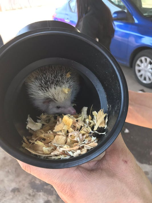 Crews rescued a hedgehog and two dogs from an apartment fire in downtown Phoenix on July 18.