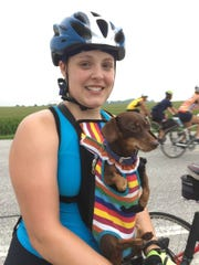 Bella, a dachshund, is carried by owner Steph Choquette