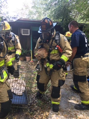 Two cats were rescued from a house fire in Merritt Island Monday afternoon.