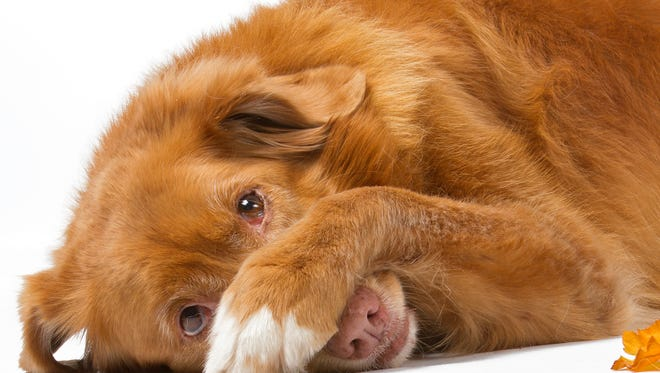 """There are ways to handle """"excitement urination,"""" which is not all that uncommon among dogs."""