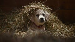 """Budweiser has a Super Bowl ad called """"Lost Dog."""" ["""