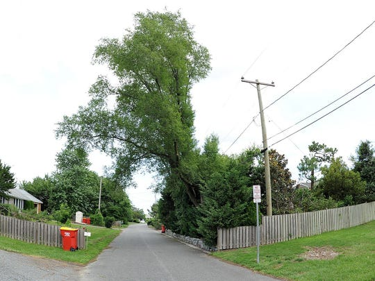 Overgrown trees and shrubs at two houses in the Seabreeze community west of Dewey Beach has led to a nasty neighborhood legal battle.