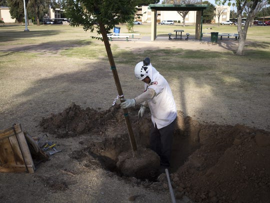 Gabriel Guillen of the city of Phoenix plants a tree