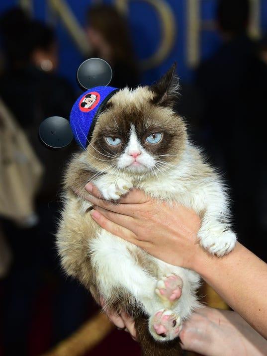 Grumpy Cat Sat