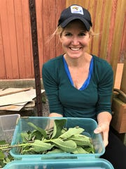 Amy Jutte holds a plastic bin in which she housed caterpillars in an effort to save monarch butterflies. Tiny caterpillars can be seen on the milkweed placed in the container.