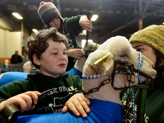 Manatawna-Saul 4-H Club members Forest Detweiler, 10, and Zoe Murphy, 13, work to groom Will the sheep at the 101st Pennsylvania Farm Show Saturday, Jan. 7, 2017.