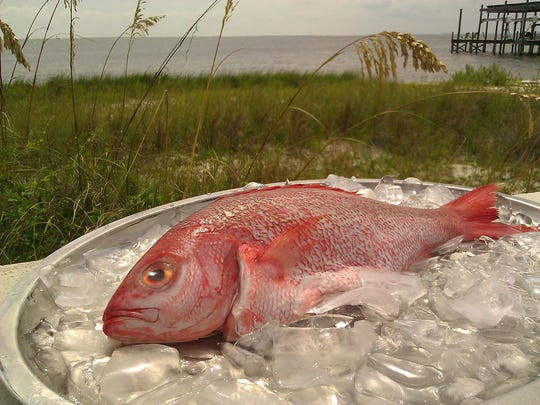 Red snapper season at center of controversy