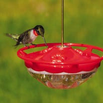 Make sure to leave your hummingbird feeders out two weeks after you see your last bird.