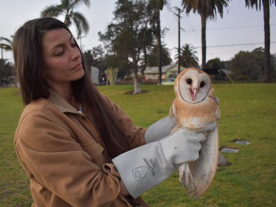 owl1.jpeg
