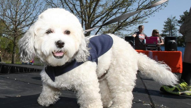 Those in violation of Dover's new leash law will face fines.