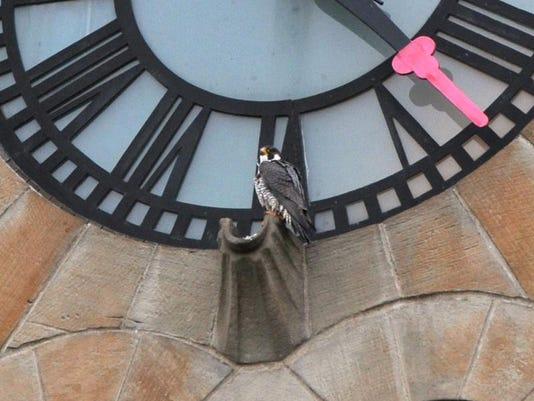 falcon file 1