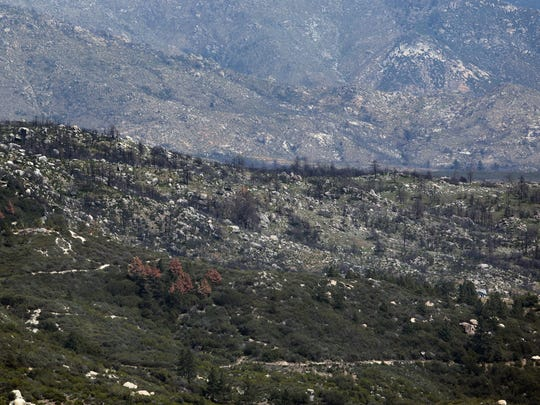 The ridge in the middle of this photo was burned by the July 2013 Mountain Fire. The brown pines below the burn area show signs of a bark beetle infestation on May 12, 2015.