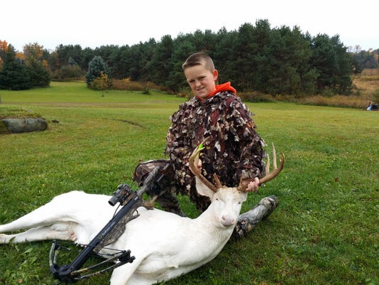 DNR on rare albino deer hunt: 'No indication anything done
