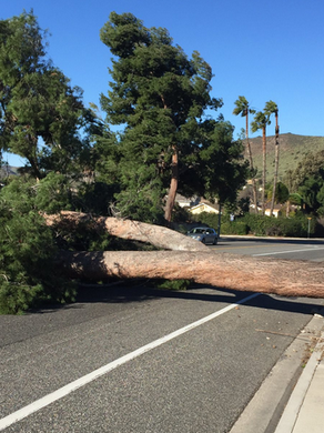Thousand Oaks Downed Tree