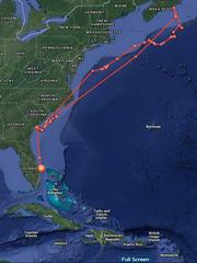 A great white shark nicknamed Savannah ventured off