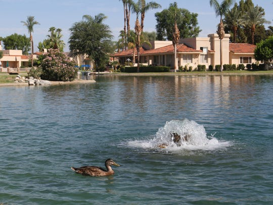 A duck swims in the community of Lake Mirage Racquet Club in Rancho Mirage.