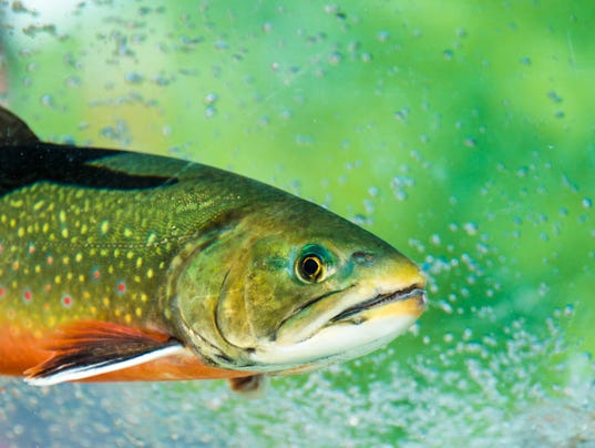 State wants your opinion of new fishing regulations for Nys fishing seasons
