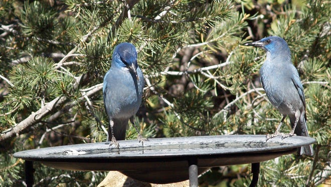 People can come and be a bird counter during Saturday's Silver City Christmas Bird Count.