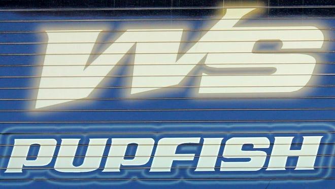 White Sands Pupfish stock photo.