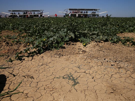 Dry cracked earth is visible on a cantaloupe farm on August 22, 2014 near Firebaugh, California.