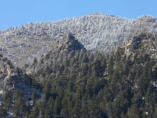 A dusting of snow covers the trees at the higher elevations toward the peak of Mt. San Jacinto, Monday, November 16, 2015.