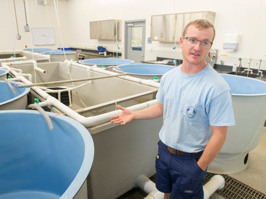 Hatchery manager Max Westendorf explains that juvenile fish, now in their fry stage, are moved into these tanks in which they grow at the Alabama Department of Conservation (Marine Resources Division) in Gulf Shores, Alabama.  Once the fish grow to between one and two inches, they are ready to be released.  Thursday, November 9, 2017.