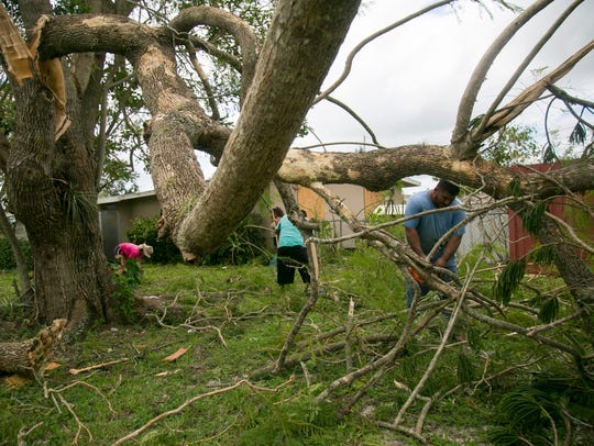 Hildo Marroquin cuts tree branches from a large tree